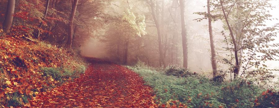 forest-slider